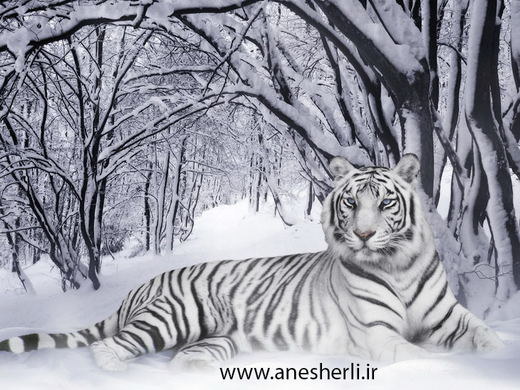 http://anesherlii.persiangig.com/image/heyvanat/0.974694001281777975_pixnaz_ir.jpg